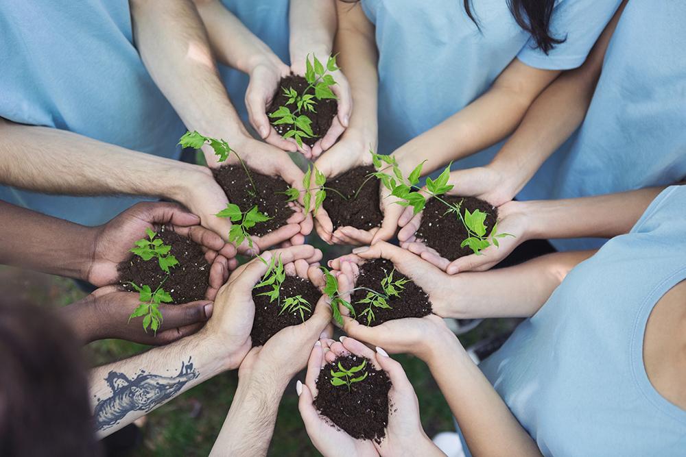 複数人がそれぞれ植物の苗を手で持っている